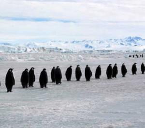 Resilience of penguinsResilience of penguins