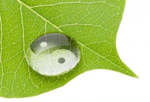 Ying Yang Leaf