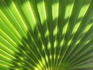 Fan of Green Leaves
