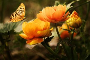 an image of an orange butterfly readying to land on an orange flower indicating the notion that even the smallest event can effect the larger system it's a part of
