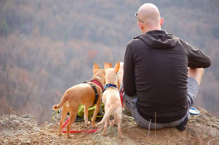 salvati-due-cagnolini-sui-monti-di-udine:-erano-finiti-in-un-canalone