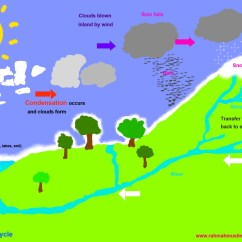 Water Cycle Diagram With Explanation Nephron Labeled Science Worksheets The Resources Of Islamic Homeschool