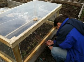 Hook and eye latches attach the cold frame to the raised bed and help keep unwanted garden critters away from our plants.