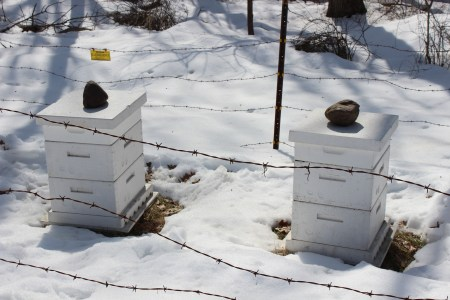 Raíces Apiculture Initiative Beekeeping Field Trip. Because of bears, Mr. Yarnell keeps an electrified barbed wire fence around his beehives.