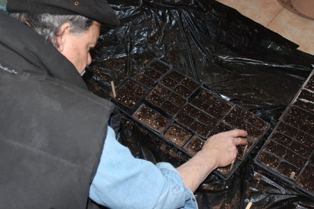 Francisco planting peppers, tomatoes, brassicas and lettuce on our first seed planting day of the 2014 growing season.