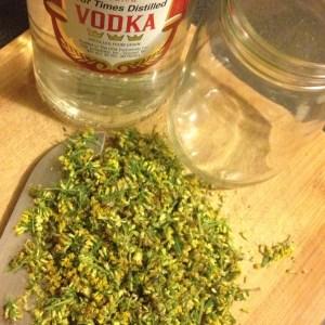 Tincture making supplies-fresh goldenrod, vodka and a glass jar