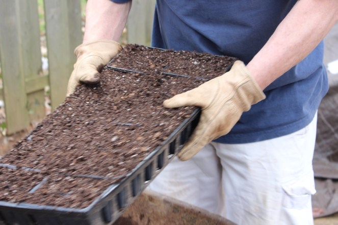 Prepping seed trays with seed starting medium.