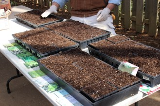 Lining up herb seeds to plant for the Raíces EcoCulture gardens and our 2016 seedling sale.