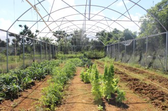 Don Luis' greenhouse 4 months after the storm.