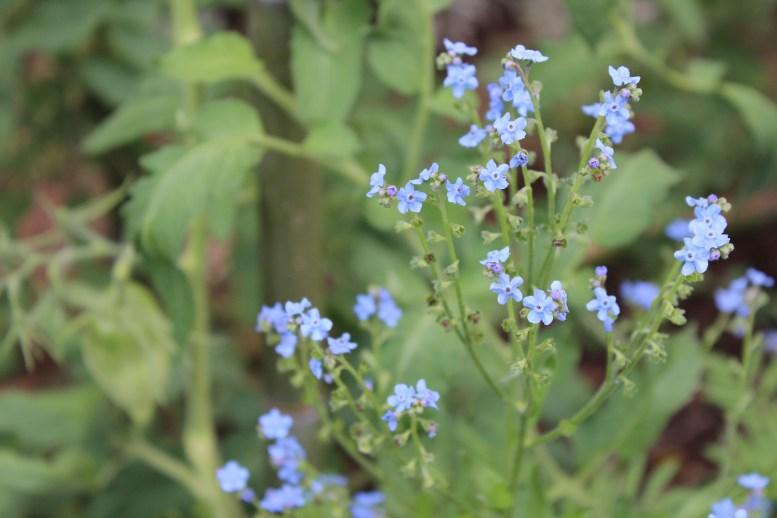 Wlldflower