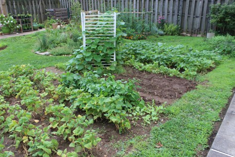 The backyard micro farm