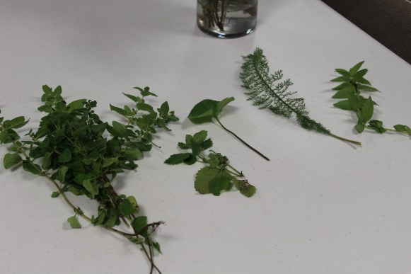 Fresh herbs to share with circle members.