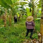 8-raikaset-small-house-in-banana-plantation006-20210717