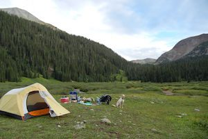 camping withyou dog