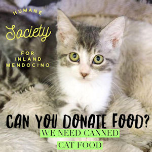 Please donate food