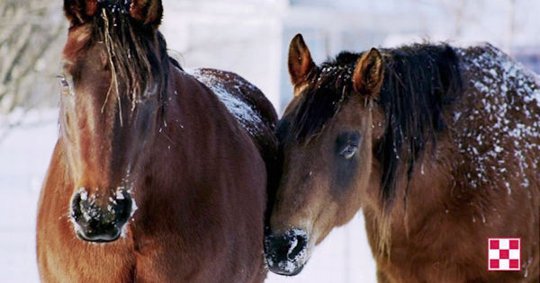 Horse Hoof health and nutrition