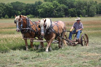 HOrse drawn hay mower