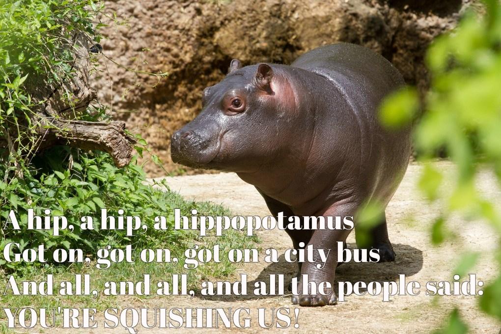 hippopotamus-2260681_1920