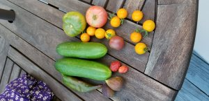 Ripe tomatoes, cucumbers and figs on a teak table