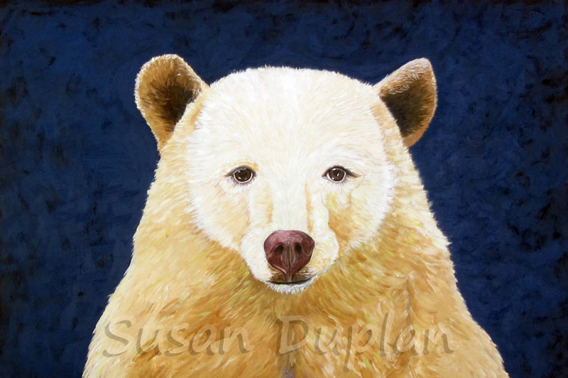 A Spirit Bear looks out at the viewer from a blue background