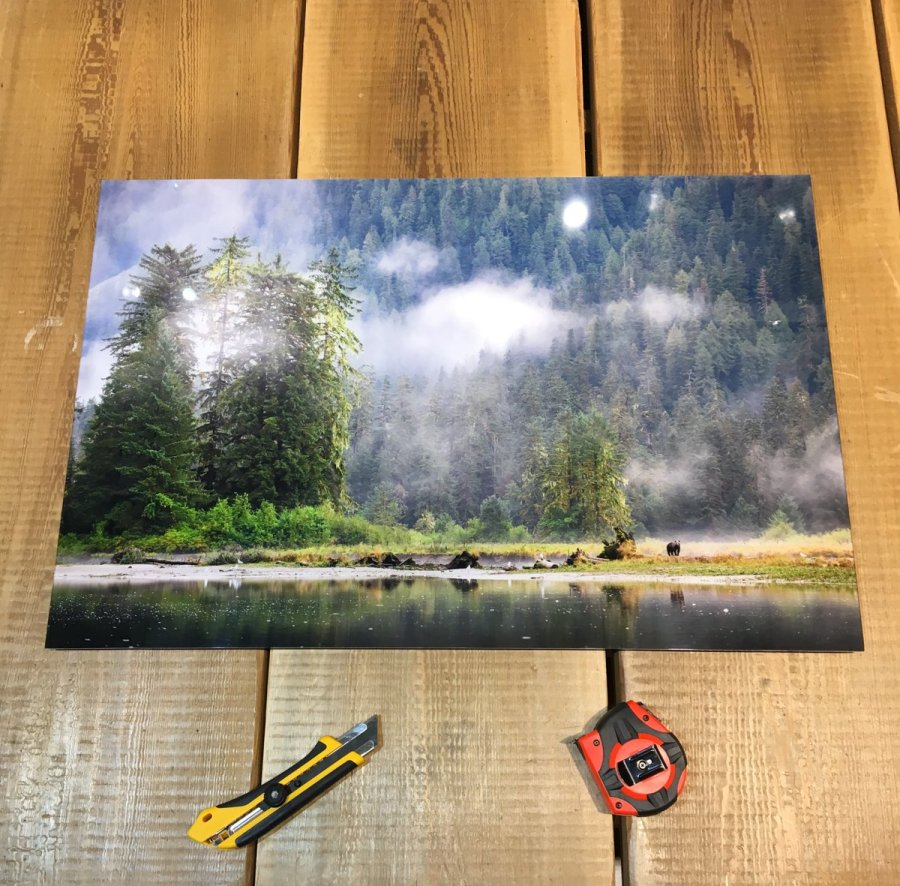 A photo print on a wooden surface with a measuring tape and exacto knife. The photo shows a male grizzly bear in front of misty trees at the edge of the estuary.