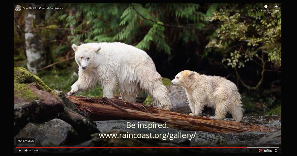 One Shot for Coastal Carnivores video thumbnail.