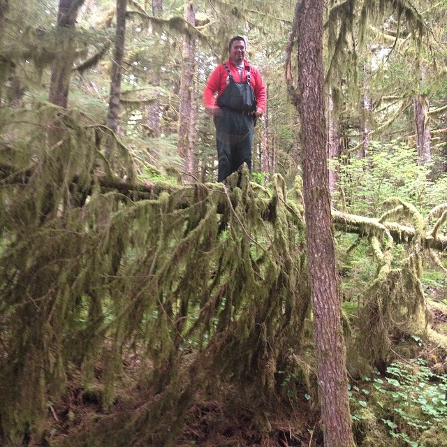 One man in blue overalls and a red shirt stands atop a fallen log high off the ground, as part of the Raincoast bear research team on Bella Bella