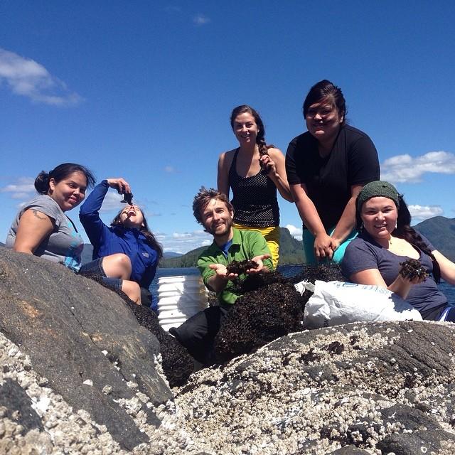 Picking seaweed with the Qatuwas crew