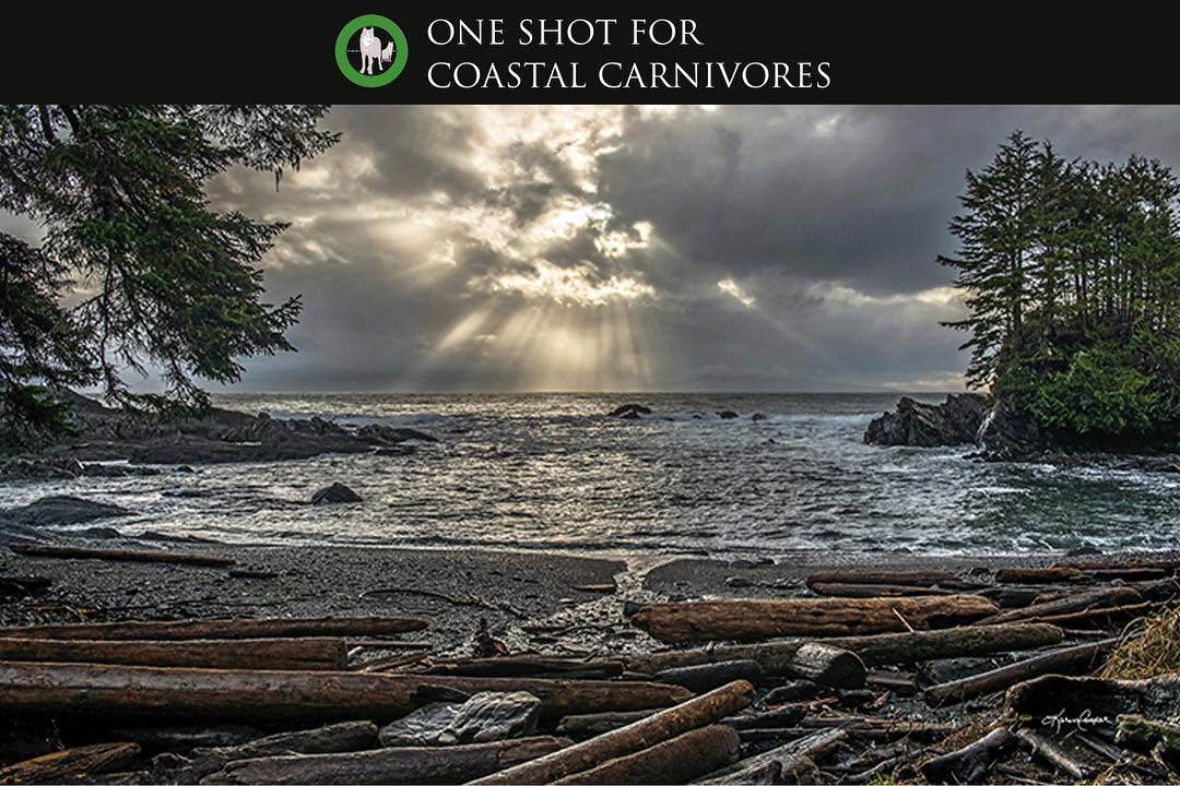 Photo Exhibit titled Botany Bay by Karen Cooper hows logs on a beach and waves washing up quietly to shore with the sun rays peeking out behind clouds in the background and the leaves of a tree overhanging to the left