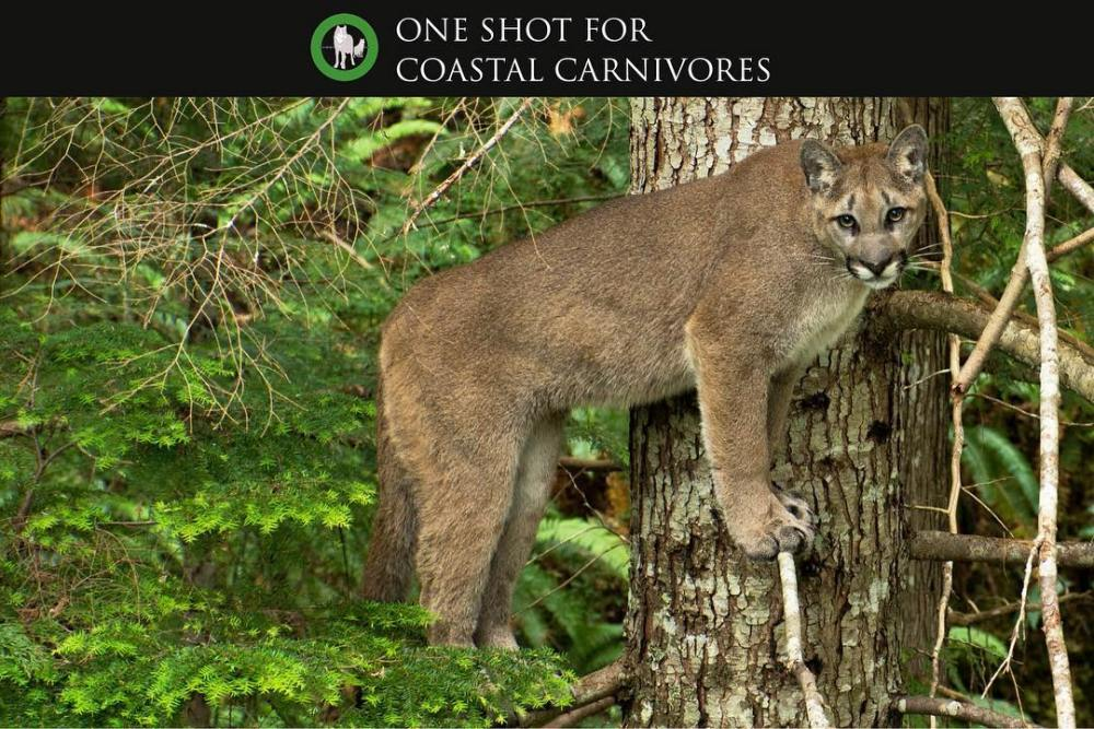 One Shot for Coastal Carnivores Feature  - Witness by Tavish Campbell