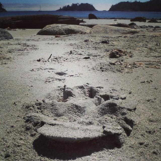 Coastal wolf tracks on the way to Koeye Camp