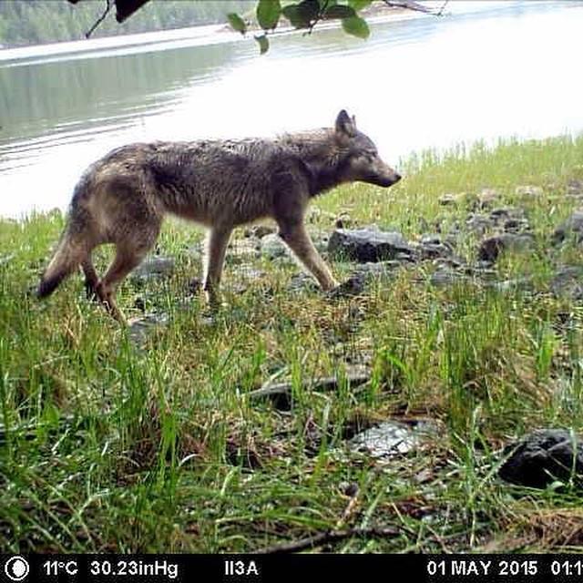 Gulf Islands and Vancouver Island predator study