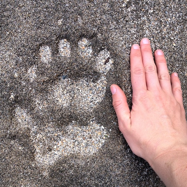 Bear prints trail