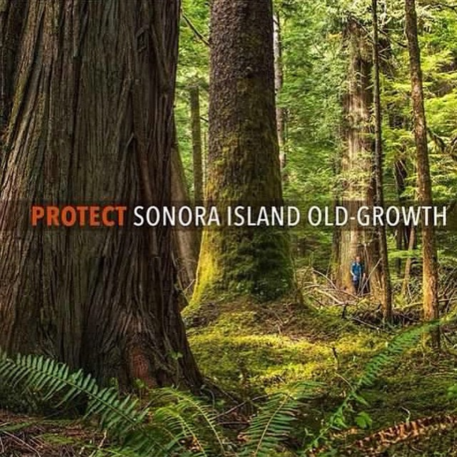 Protect Sonora Island old-growth forests