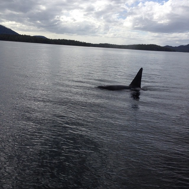 Dusky sky, grey waters and a lone whale tail fin and body visible