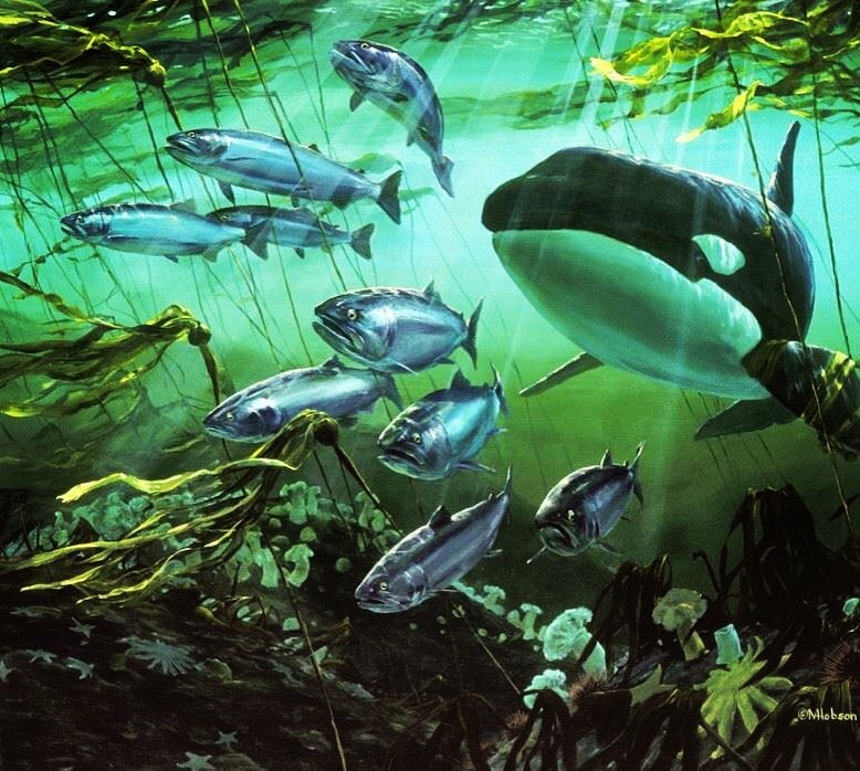 Poster of many orcase under water with green light