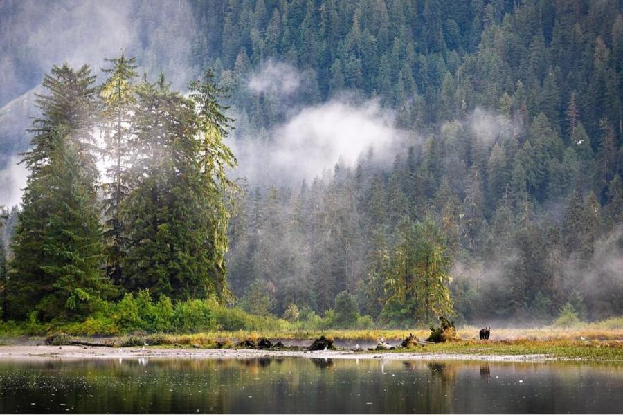 still water of a lake with BC forests in the background and a low lying cloud or two floating.
