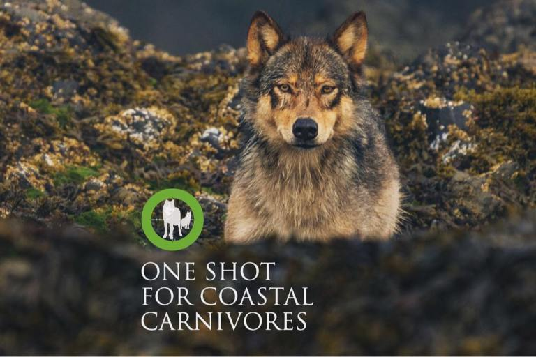 This fall we unveil a unique photographic exhibit: One Shot for Coastal Carnivores