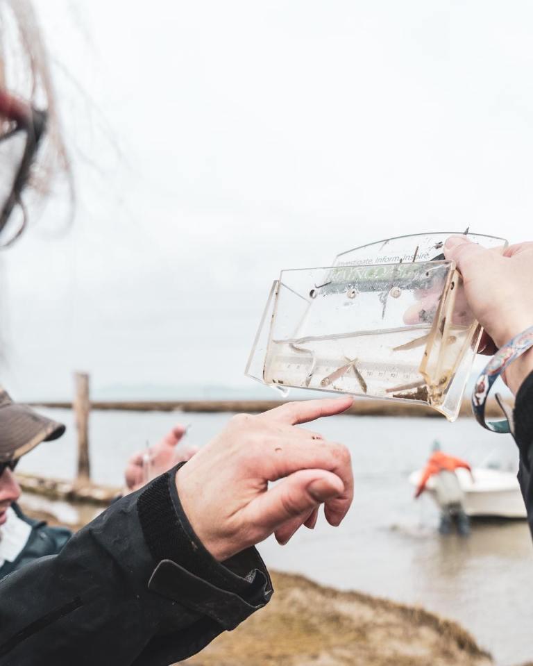 Win for salmon in Fraser Estuary