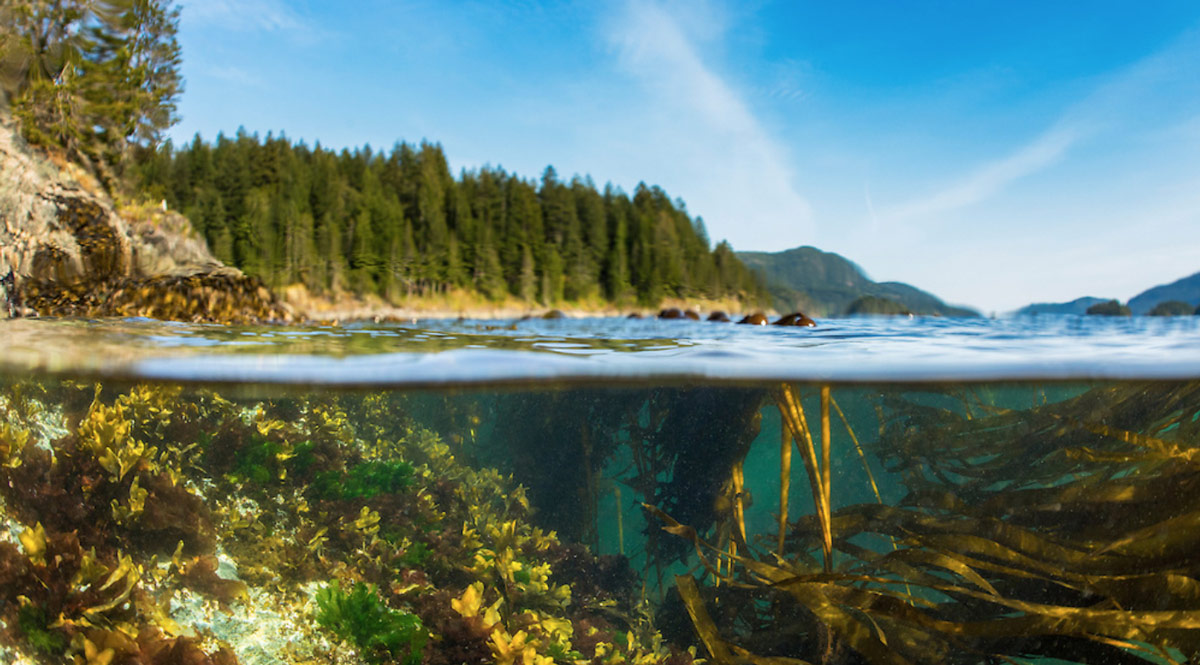 A view of under the water, and on top of the water, with rich blues and greens on the West coast.