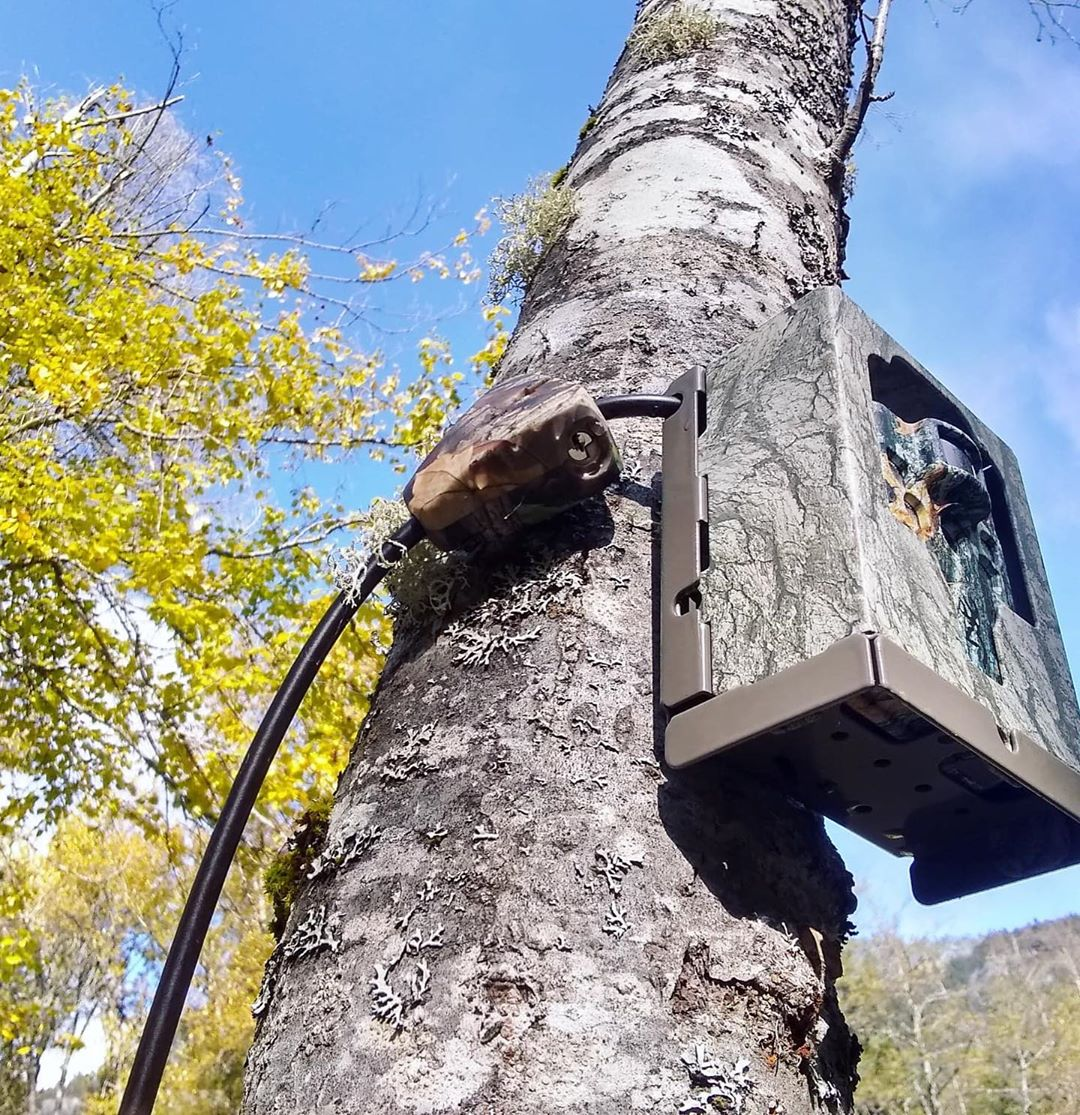 Tree trunk stretches into the sky with a bear monitoring rectangular box camouflaged and attached.