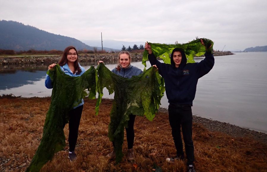 Three youth leaders stand on the beach holding up large green pieces of seaweed.