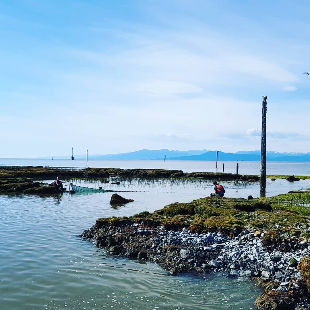 View of the Steveston jetty on the Fraser river and a net strung across its banks to catch fish