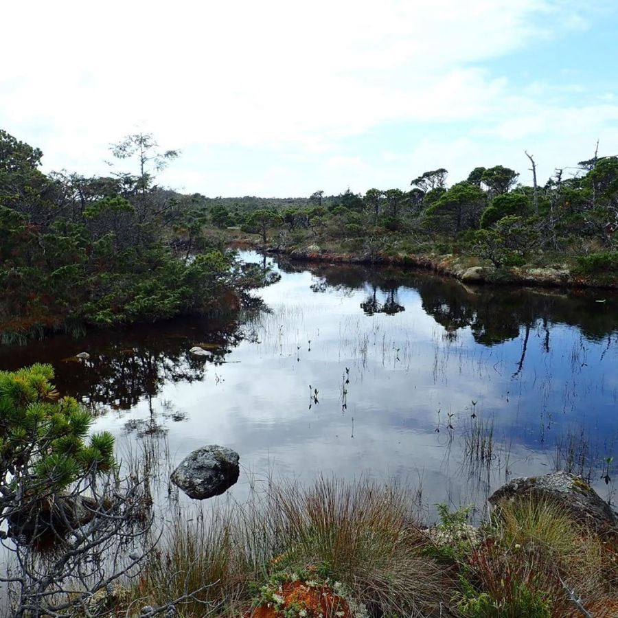 bog of water surrounded by grass and shrubs