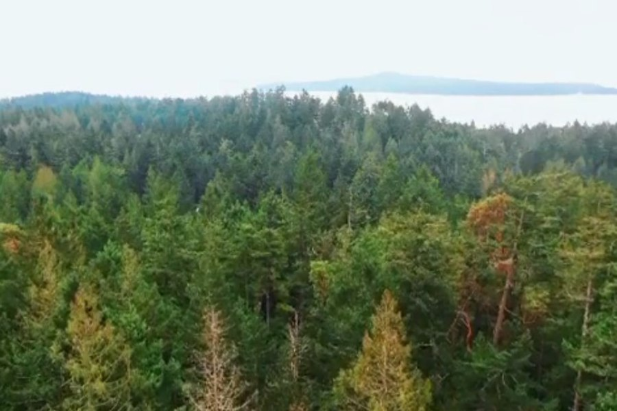 A green forest filled with Doughlas-fir, arbutus and cedar trees with the ocean visible near the horizon.