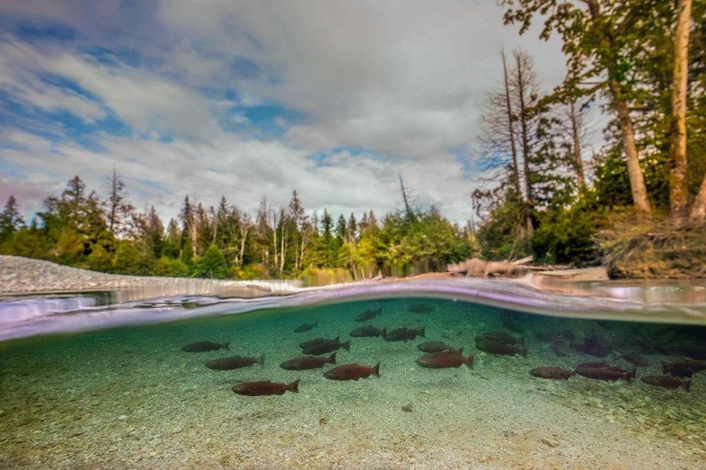 Invest in Pacific wild salmon