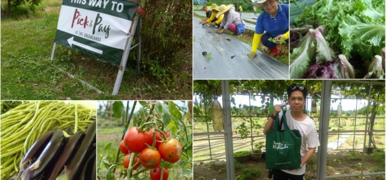 PICK & PAY | Providing Livelihood For Farmers in Tagaytay Highlands