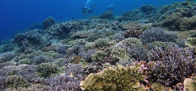 Reef Monitoring System is Crucial to Save PH Corals Experts Says