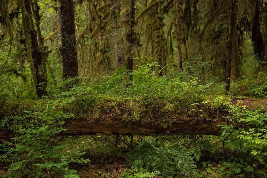 There is usually also 200 to 1000 cm of rain each year making it one of the biomes with the most rain. The Beauty Of Connection Lessons From A Temperate Rainforest Rainforest Alliance