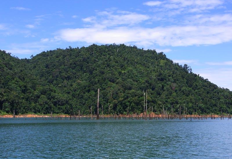 Kenyir logged forest